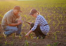 consulenza fitosanitaria