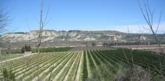 agrumicoltura