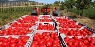 Codice etico pomodoro industria