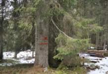 bosco sostenibile