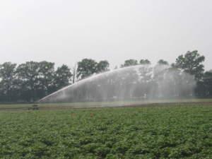 Irrigazione Cer - Terra e Vita