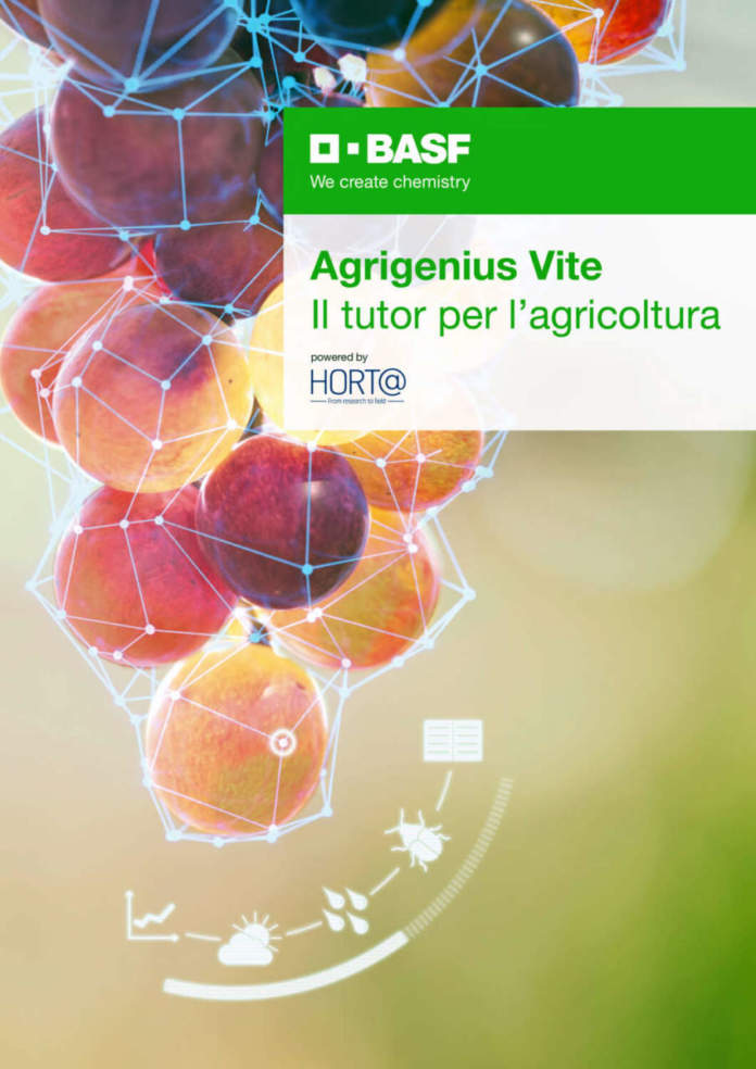 agrigenius vite