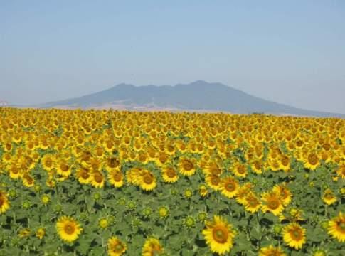 Collaborazione internazionale in ambito fitosanitario: dalla ricerca agli standard