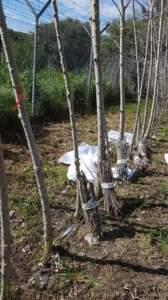 Biomassa 1