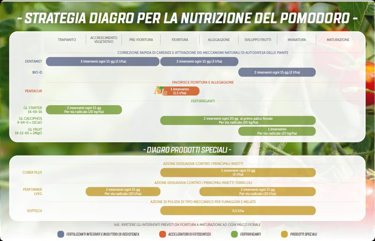 Strategia nutrizione pomodoro