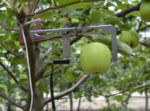 irrigazione frutteto