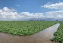 nord foggiano alluvione