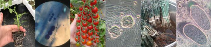 microbioma in frutticoltura