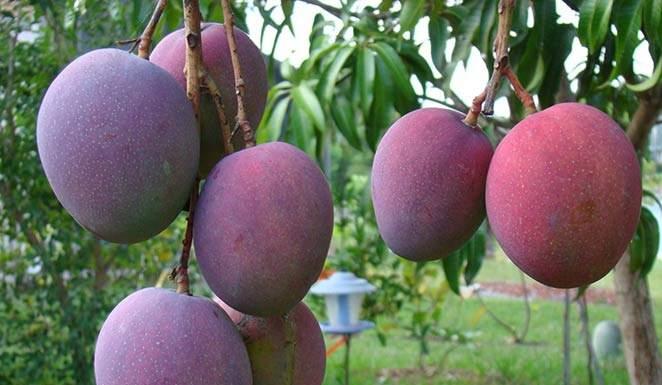 puglia colture tropicali