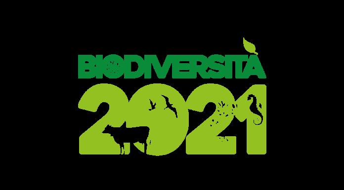biodibersità