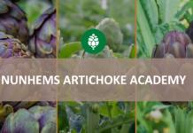 nunhems artichoke academy