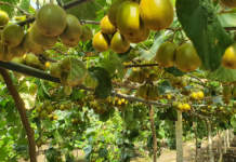 biostimolante cropmax