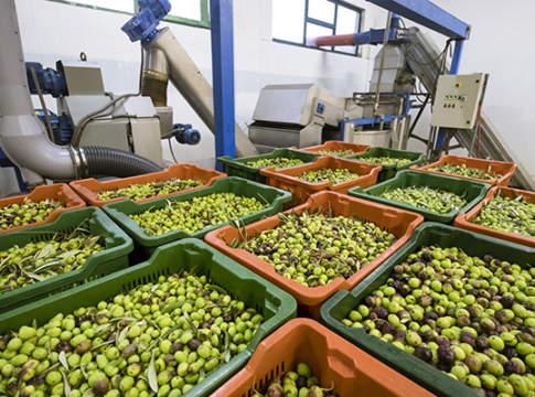 raffreddamento olive